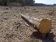 Skogsavverkning Arkivbild