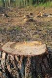 Skogsavverkning Royaltyfri Bild