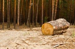 Skogsavverkning Arkivbilder