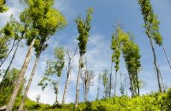 Skogsavverkning Royaltyfria Foton
