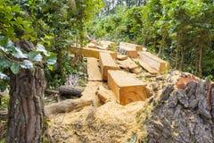 Skogsavverkning den permanenta förstörelsen av skogar för att att göra landet tillgängligt för annat använder Arkivbilder