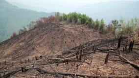 Skogsavverkning efter skogsbrand, naturkatastrof arkivfilmer