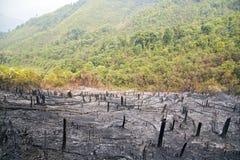 Skogsavverkning efter skogsbrand, naturkatastrof, Laos royaltyfri fotografi