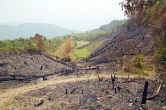 Skogsavverkning efter skogsbrand, naturkatastrof, Laos arkivbilder