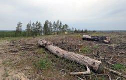 Skogsavverkning i centrala Ryssland Arkivfoton