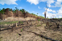 Skogsavverkning i Filippinerna Royaltyfria Bilder