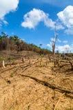 Skogsavverkning i Filippinerna Arkivfoto