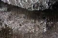 Skogsavverkning i Rumänien i vinter Arkivfoton