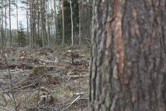 Skogsavverkning livlös del av skogekologin royaltyfri fotografi