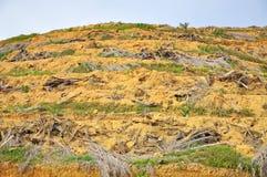 Skogsavverkning och replanting av den olje- palmträdet för barn Royaltyfri Bild