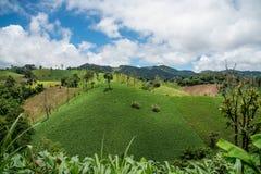 Skogsavverkning på berget för jordbruks- på Tak landskap I Arkivbild