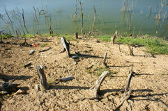 Skogsavverkning stubbe, ändringsklimat, bosatt miljö Arkivbild