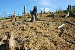 Skogsavverkning stubbe, ändringsklimat, bosatt miljö Royaltyfri Bild