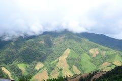 Skogsavverkningen royaltyfri foto