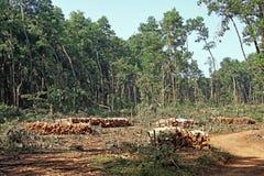 Skogsavverkningoperation i Kerala Indien Royaltyfria Foton