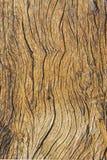 skogsbevuxen abstrakt bakgrund Royaltyfri Foto