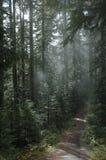 skogsbevuxen bana Arkivbilder