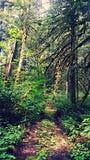 skogsbevuxen bana Arkivfoto