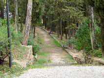 Skogsbevuxen bana som leder in i skogen Arkivbilder
