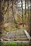 Skogsbevuxen för körning gammal bro ner på lantgård Arkivfoto