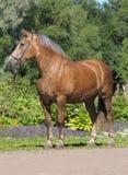skogsbevuxen hästpark Arkivbild