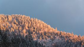 Skogsbevuxen kulle i aftonsolljuset Royaltyfri Bild