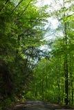 Skogsbevuxen landsväg i Pennsylvania Royaltyfri Fotografi