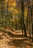Skogsbevuxen slinga i nedgång med sidobelysning Arkivfoton