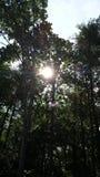 Skogsbevuxen soluppgång Arkivfoton