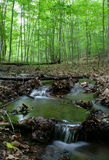 skogsbevuxen ström Arkivbild