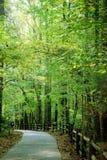 skogsbevuxen trail Arkivbilder