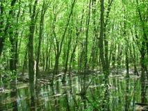 Skogsbevuxen vattenliggande fotografering för bildbyråer