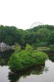 Skogsbevuxet damm i park royaltyfri foto