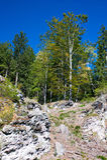 skogsbevuxet toppmöte Royaltyfria Foton