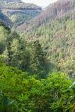 Skogsbevuxet träd fodrad dal Förenade kungariket, Europa Höst eller nedgång Arkivbilder