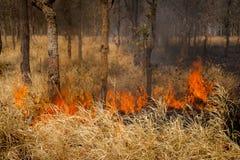 Skogsbränder Arkivfoton