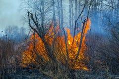 Skogsbrand Royaltyfri Fotografi