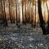 Skogsbrand Royaltyfria Foton