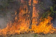 Skogsbrand Royaltyfria Bilder