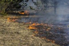 Skogsbrand Arkivfoto