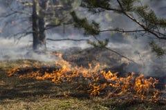 Skogsbrand Fotografering för Bildbyråer