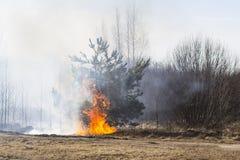 Skogsbrand Arkivbild