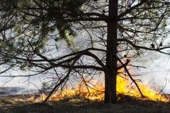 Skogsbrand Arkivfoton
