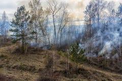skogsbrand brinnande skog fotografering för bildbyråer