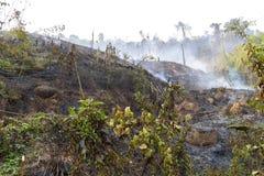 Skogsbrand från mänsklig expertis arkivfoto