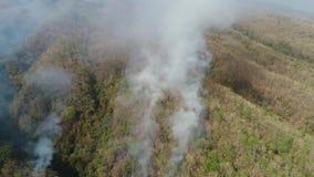 Skogsbrand i bergen arkivfilmer