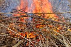 Skogsbrand i Illinois Arkivbilder