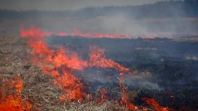 skogsbrand i natur arkivfilmer