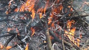 Skogsbrand sikten av bränningfilialer lager videofilmer
