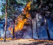 Skogsbrandbränning, löpeld som är nära upp på dagen tim royaltyfria foton
